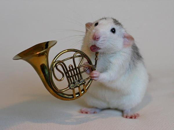 004 white rats