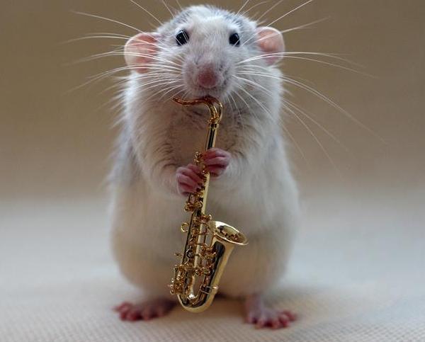 005 white rats