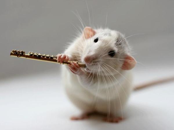 007 white rats