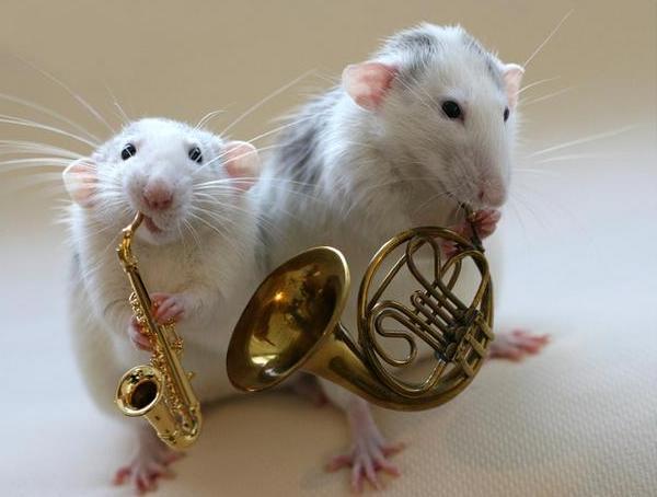 008 white rats