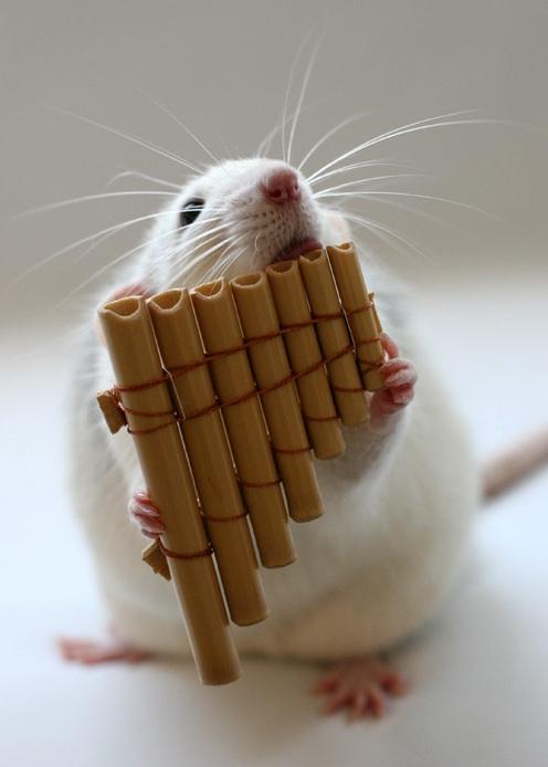 009 white rats