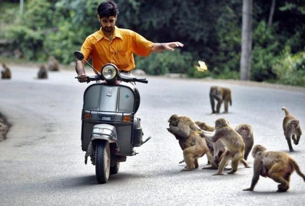 Животные и человек (61 фото)