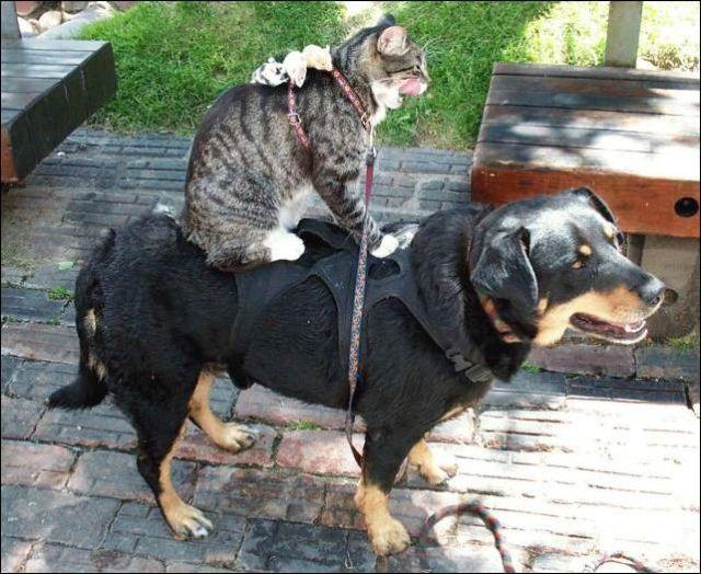 Кот и пес (55 фото)