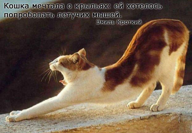 Вся правда о кошках! (20 фото)