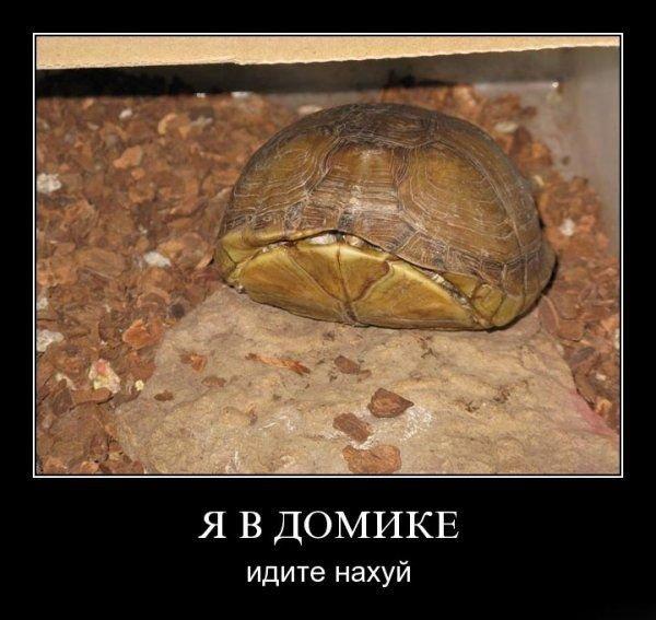 http://de.fishki.net/picsw/082009/28/demotiv/025.jpg