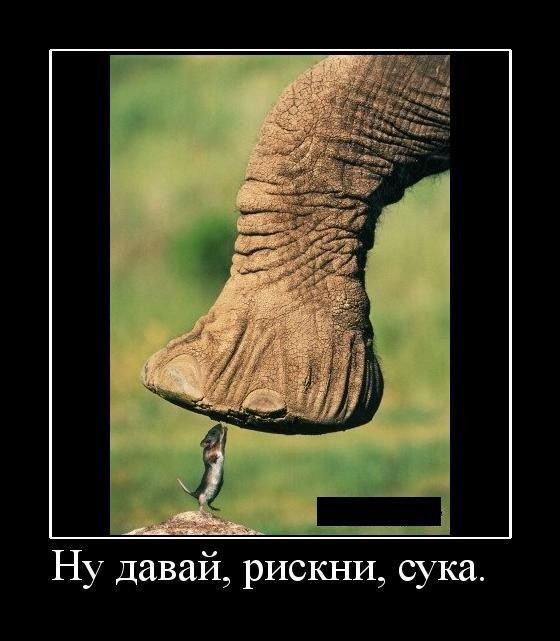 http://de.fishki.net/picsw/082009/28/demotiv/048.jpg