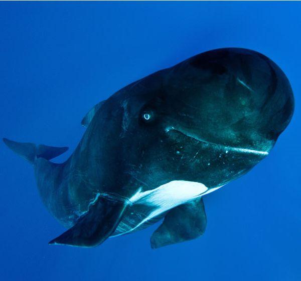 Улыбающиеся киты (8 фото)
