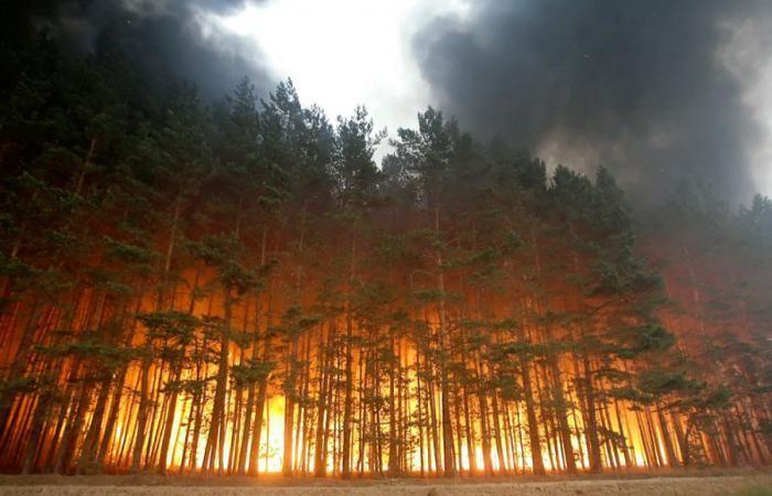 Лесные пожары в России (36 фото)
