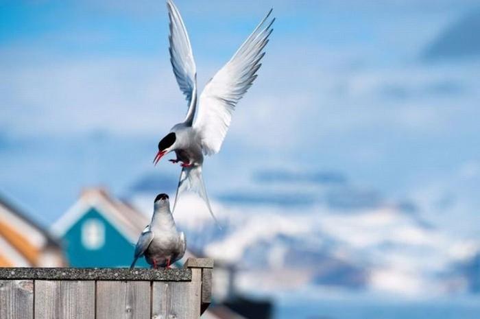 Арктика (25 фото)