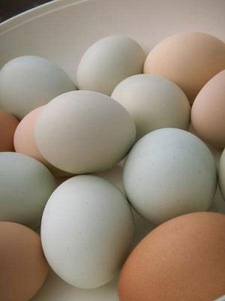 Ломатель яиц