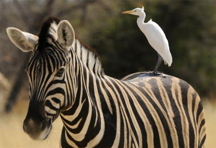 Удивительный мир животных (54 фото)