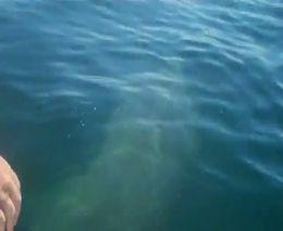 Прыгнул на акулу