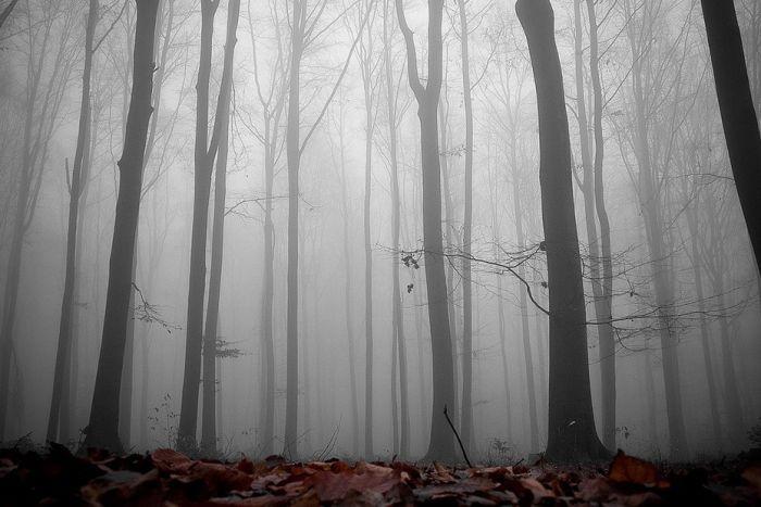 Туман в лесу (31 фото)