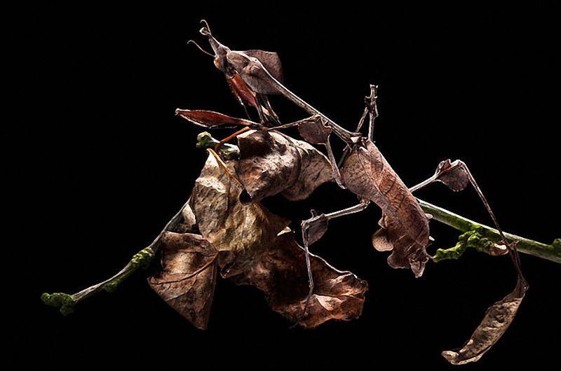 Животные – мастера мимикрии (14 фото)