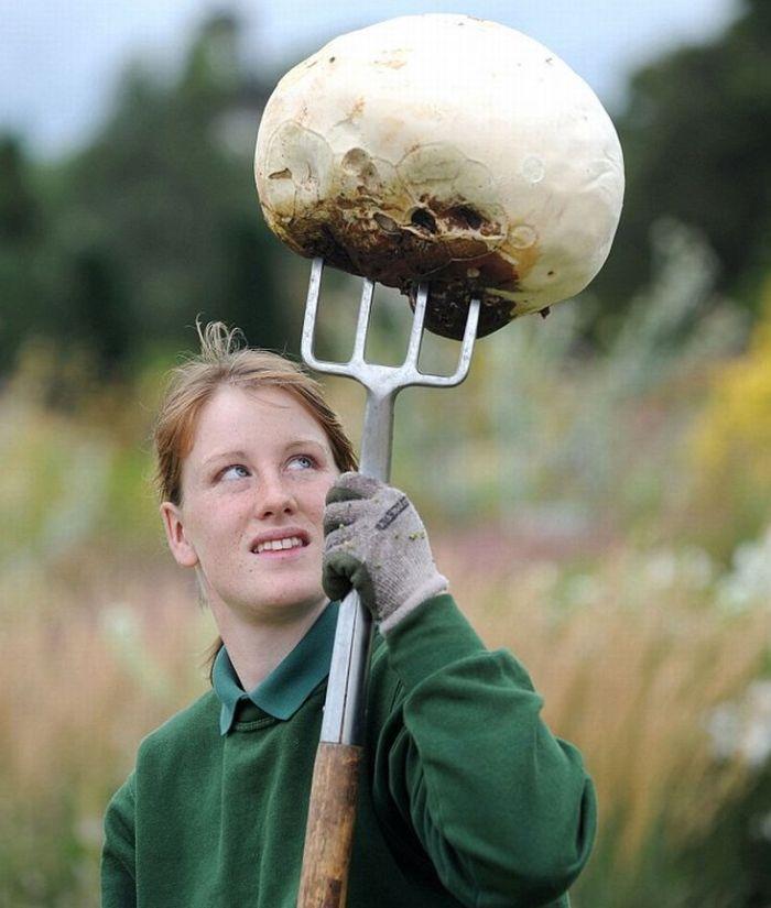 Вот это гриб созрел (3 фото)