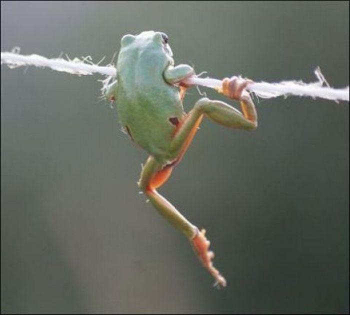 Забавная лягушка (5 фото)