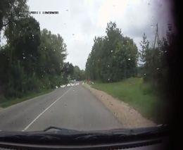 Задавил гусей на дороге