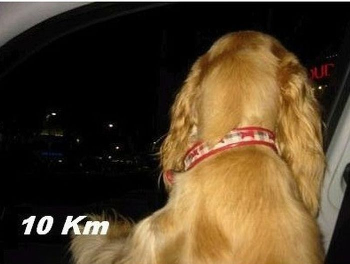 Собака в окно вылезака (10 фото)