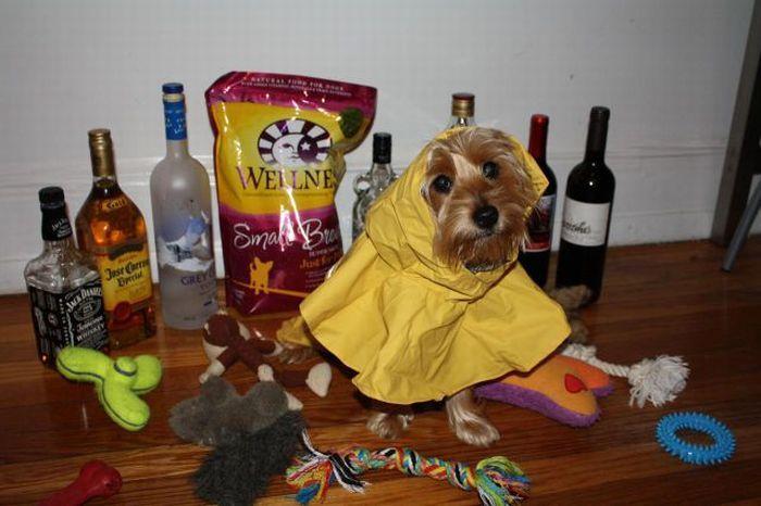 Американцы готовятся к встрече с ураганом (22 фото)