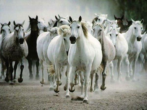 24 факта о лошадях (5 фото)