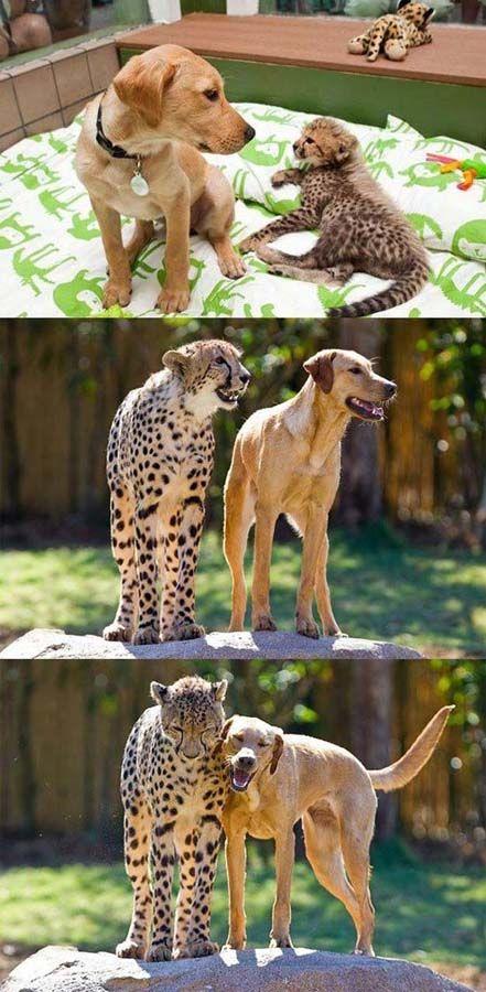 Забавные животные (80 фото)