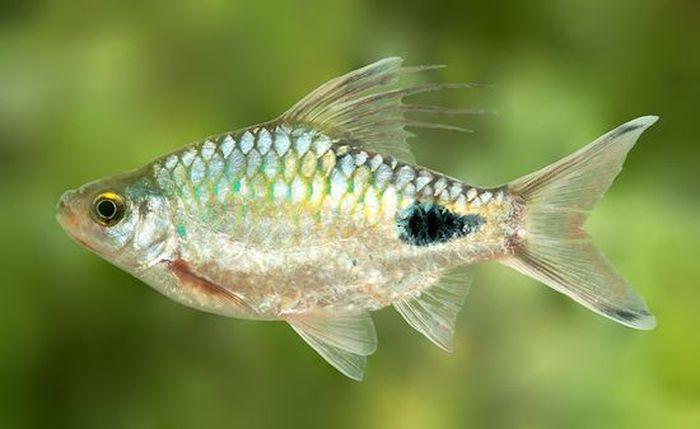 10 видов животных, названных в честь знаменитостей (10 фото)