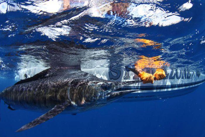 Акула нарушила планы ученых (5 фото)