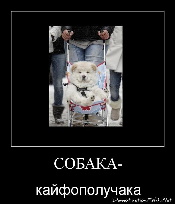 собака-