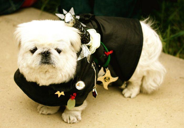Креативная мода для стильных собак (49 фото)
