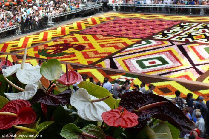 Брюссельский цветочный ковер (29 фото)