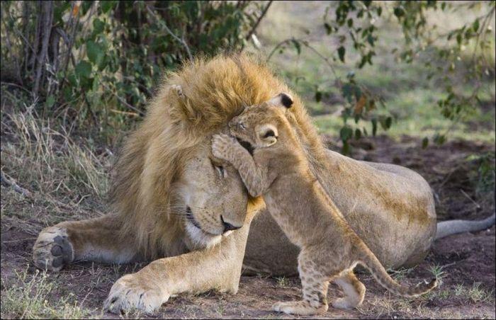 Первая встреча отца и сына (5 фото)