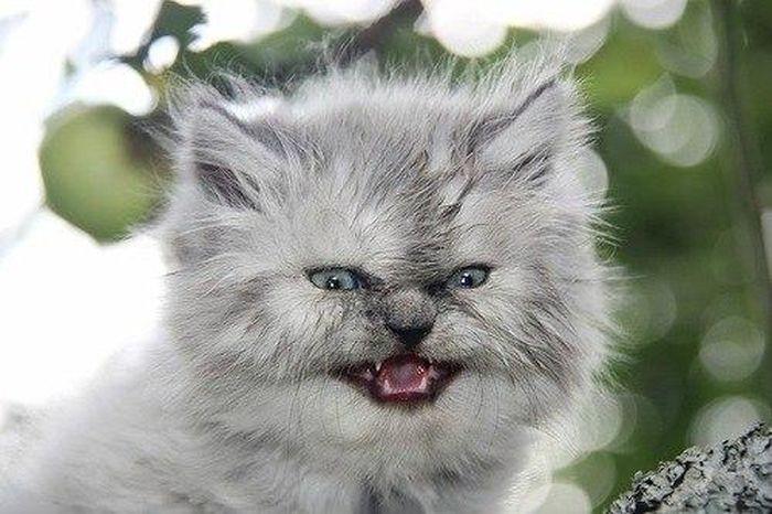 Котенок и арбуз (5 фото)