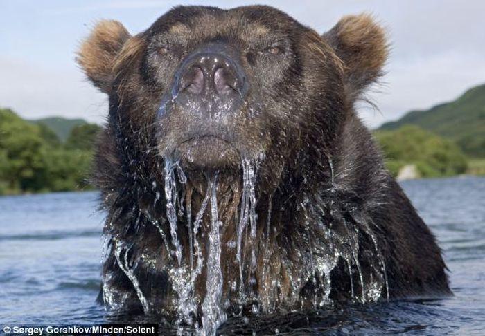 Как сфотографировать медведя (4 фото)