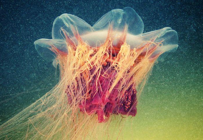 Удивительный подводный мир (44 фото)