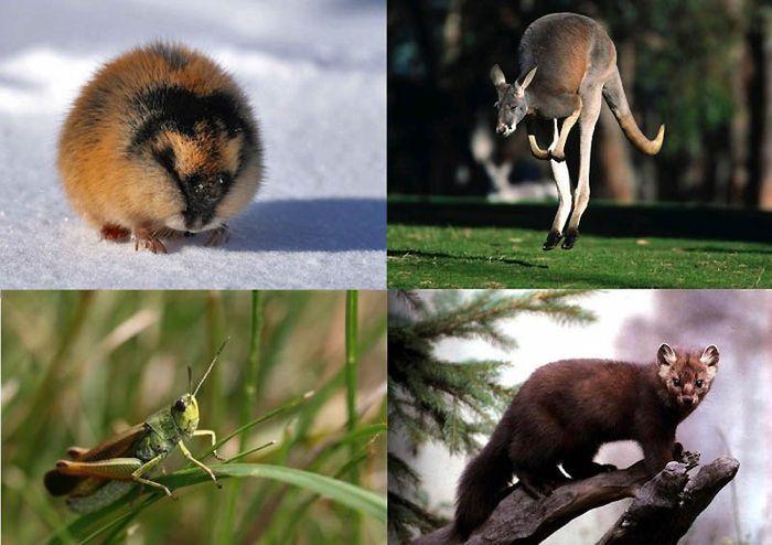 10 фактов о сексе животных (10 фото)
