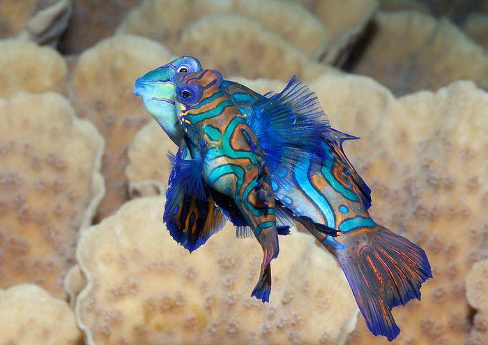 Подводные красоты Giambattista Isabella (15 фото)