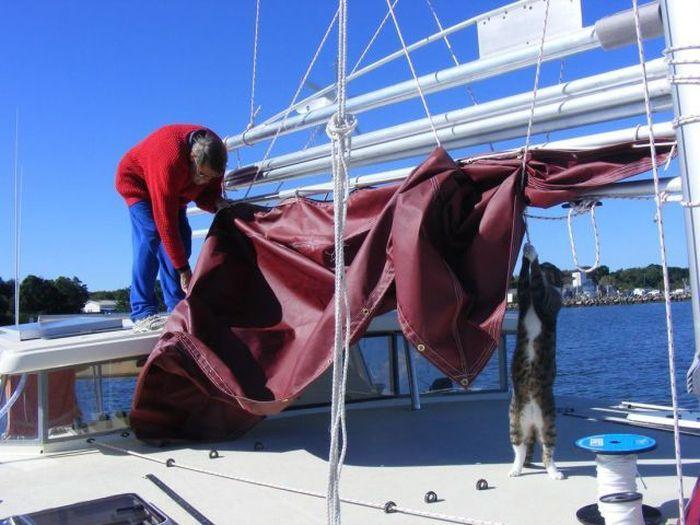 Пикантный фотоприкол кот, парус, помогает, яхта