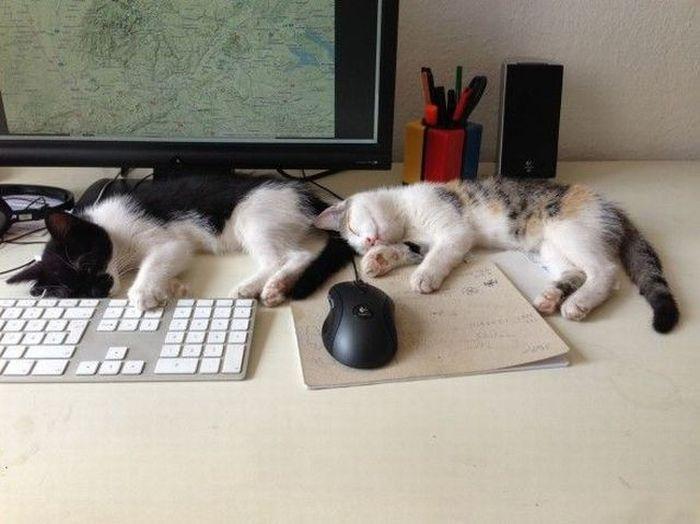 Юмор клавиатура, компьютер, котенок, мышка