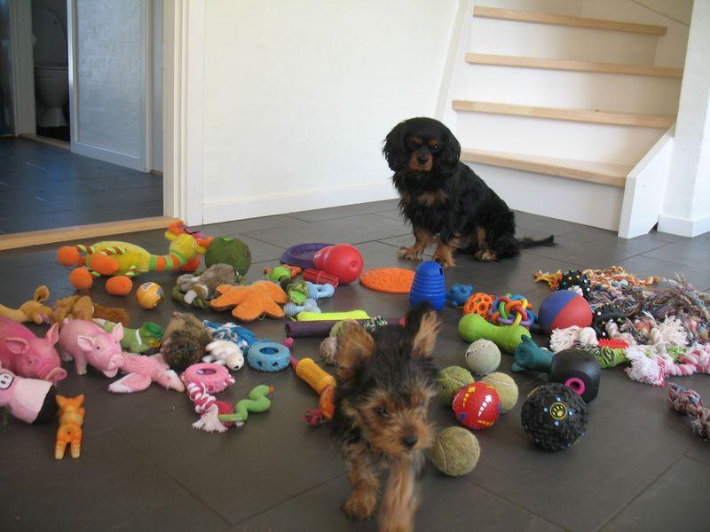 Новые фото игрушки, питомец, собака, щенок