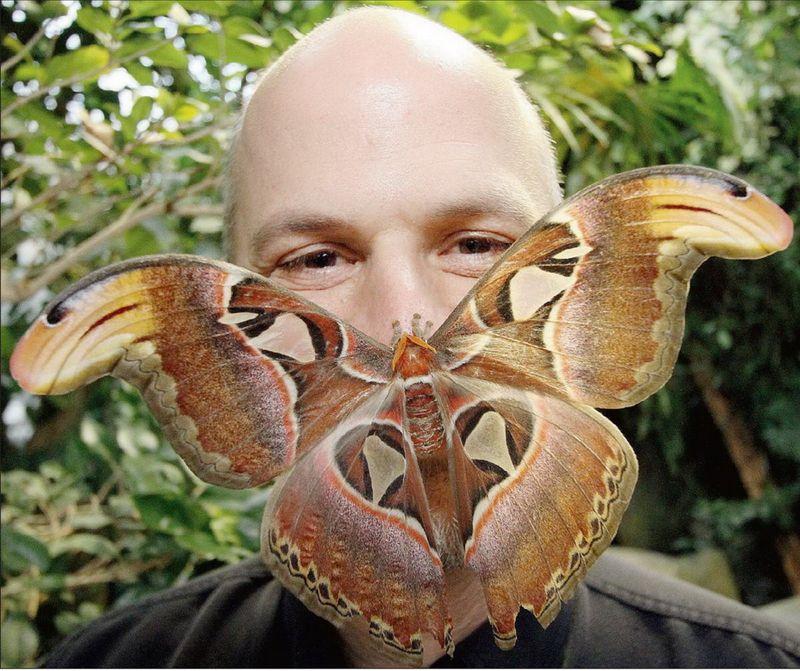 Улетное фото бабочка, красивая, на лице, прикол