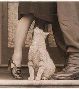 Девушки и кошки (34 фото)