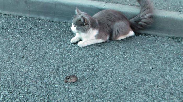 кошки мышки, опасные игры, человечность
