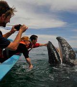 Удивительные моменты встречи с китами - фотограф Джастин Хофман