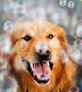 Счастливые собаки Джессики Трин (26 фото)