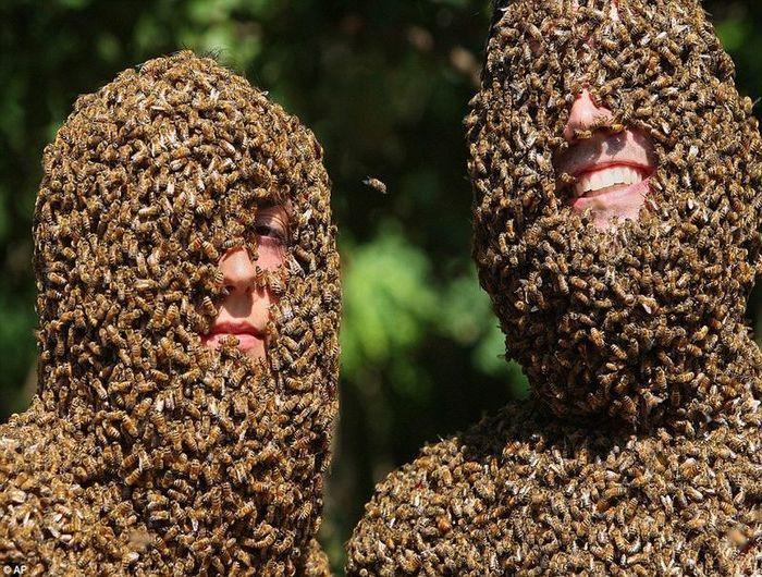 Канадские фермеры провели конкурс пчелиной бороды (5 фото+видео)