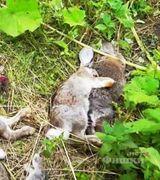 Чупакабра, убившая более 100 животных и покушавшаяся на ребенка, оказалась бродячей собакой.