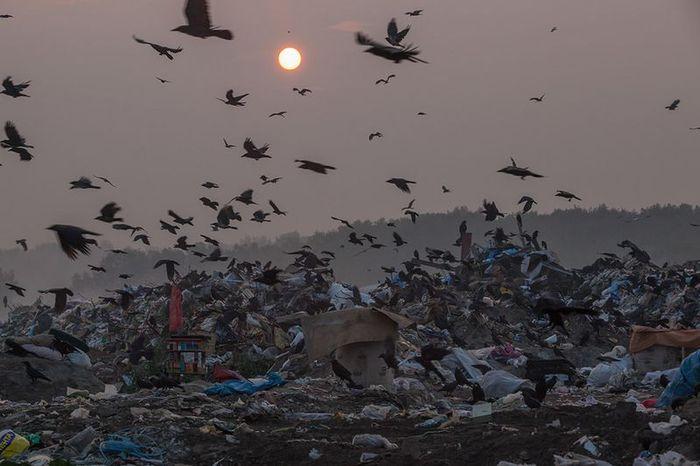 свалки, мусор, репортаж,