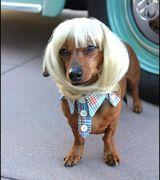 Модные парики для домашних животных (15 фото)
