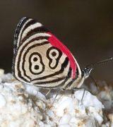 Удивительная бабочка с цифрой 89 (8 фото)