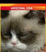 Reporter Can't Handle Grumpy Cat